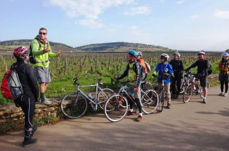 Cycling into the vineyards