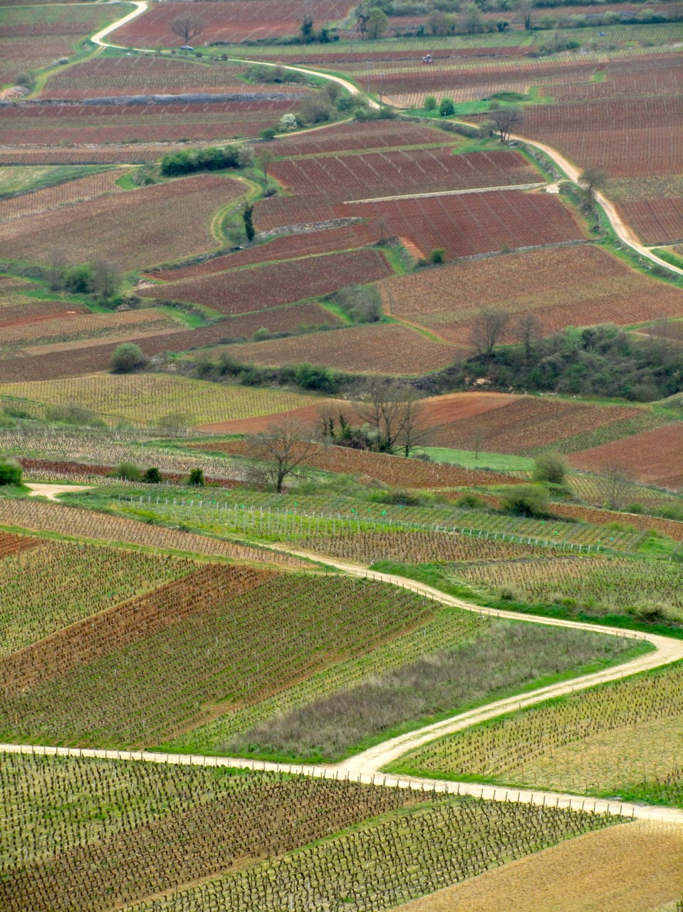 Les climats de Bourgogne - proche Meursault - Karoline Knoth © Karoline Knoth
