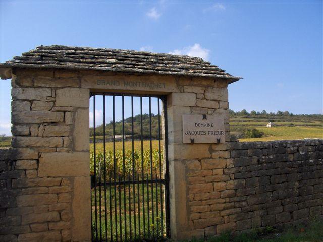 parcelle de vignes - FUGUES EN FRANCE©C. THEVENIN