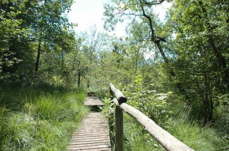 Marais des Brosses