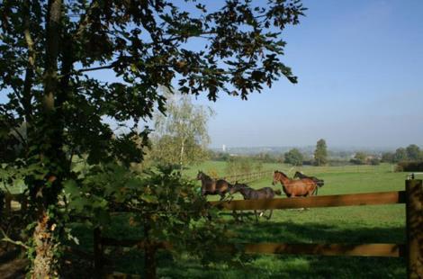 Haras de Coddes-Juhen-Cercy