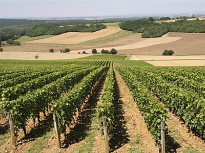 Domaine viticole Serge Dagueneau et Filles à Pouilly-sur-Loire - Crédit : ADT 58