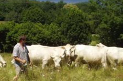 Production de viande bovine chez Didier Bouchoux - CORANCY