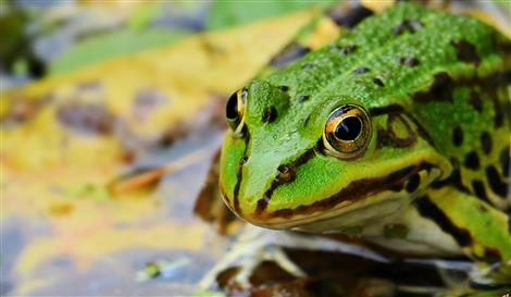 frog-1530803_1920