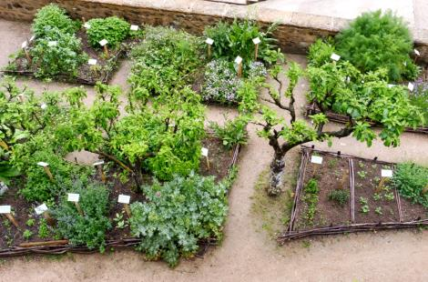 jardin des simples 1 jlm 2017