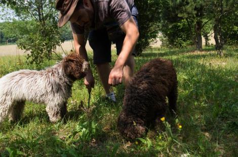 la-boutique-des-truffes(6)