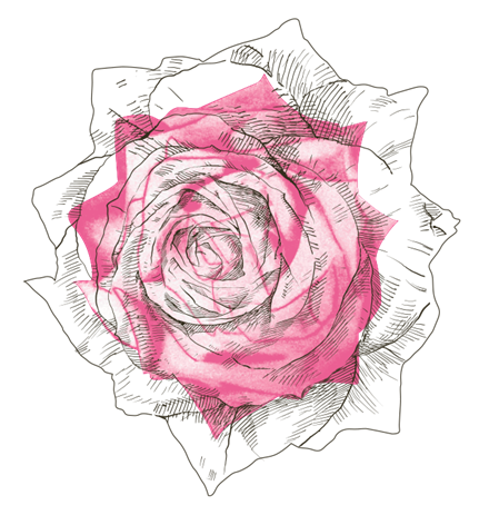 rose fond transparent