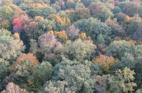 Forêt d'automne vue du dessus