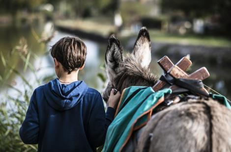 Bougres d'ânes