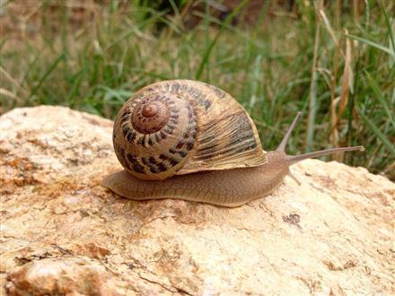 Grosnescargot 5