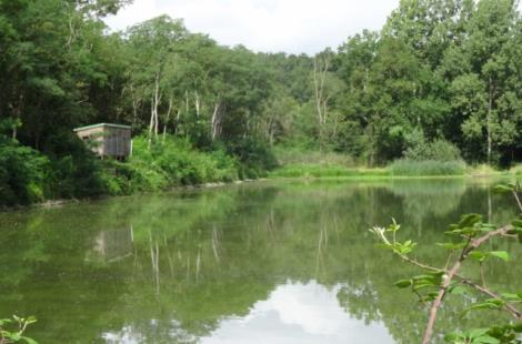 L'étang de Marvy à Neuvy-sur-Loire