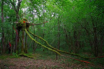 foret-geants-verts-tonnerrois-bourgogne